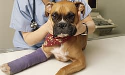 veterinary_bill_collections